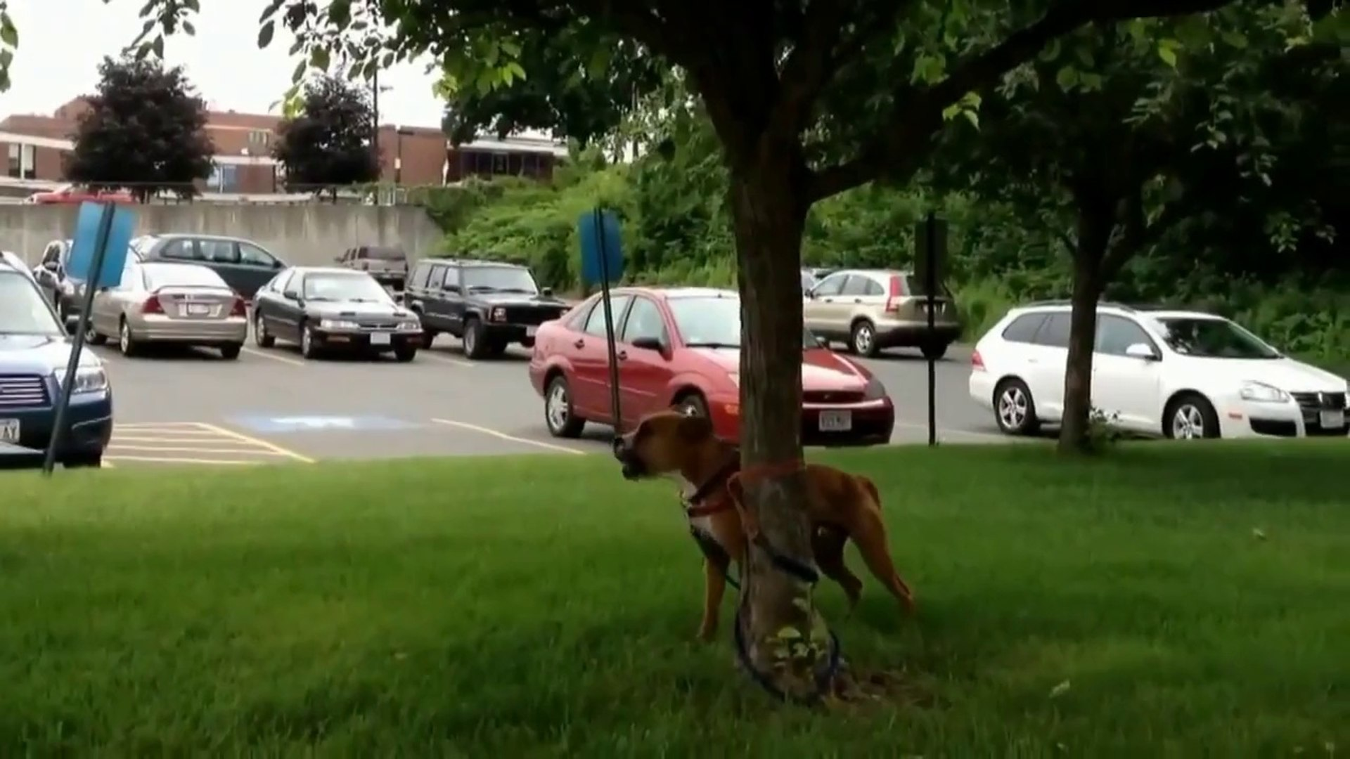 Funny dogs - Funny animals - Funny Videos - best funny dogs Compilation 2014(Risingformuli)