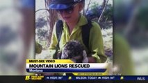 Mountain Lion Cubs Rescued From Forest Fire In Montana