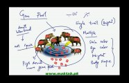FSc Biology Book2, CH 22, LEC 1: Introduction, Genes, Alleles and Gene Pool