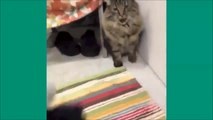 Les chats de Vine - Unbelievable vines lolcats 4 - funny cats vine