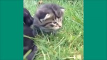 Les chats de Vine - Unbelievable vines lolcats 10 - funny cats vine