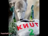 Knut The Polar Bear A Tribute Funny Pranks and Funny Animals Clips _ New Funny Videos, May 2014