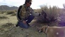 When Crazy Animals Attack Falcon Attacks Dog ~ Best Funny Animals 2014