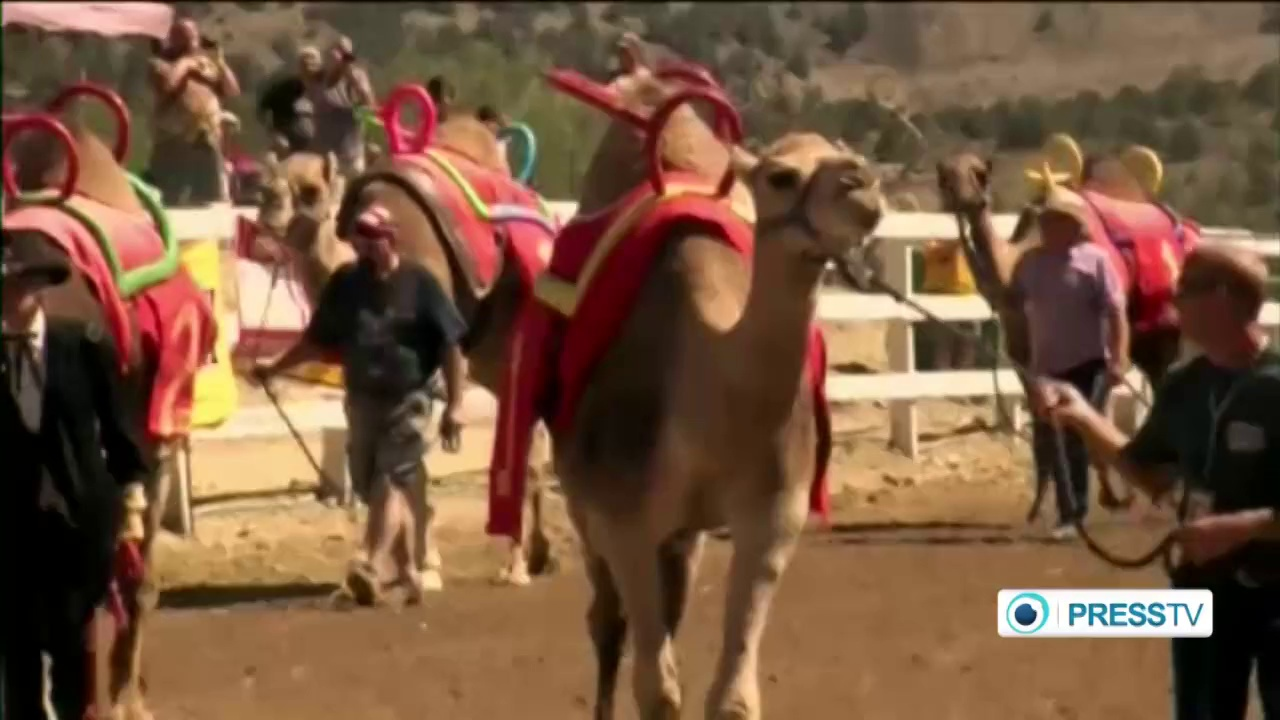 Thousands watch camels, ostriches, zebras compete at Nevada race