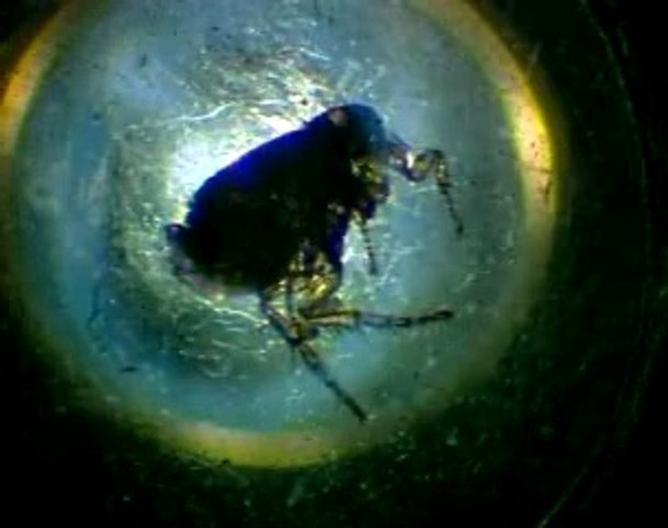Série de microscopes : le microscope composé