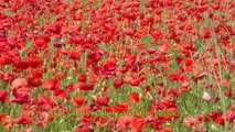Chanson hommage aux sacrifiés de la guerre 14-18
