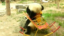 Funny and Cute Panda Videos Compilation 2014 [NEW HD]