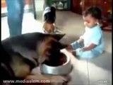 Bebek ile köpeğin inatlaşması