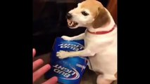 Dog Protective over his beer DOG LOVES BEER Vine By Jon Langston