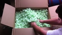 Ferrets Playing In Packing Peanuts - Pet Ferrets