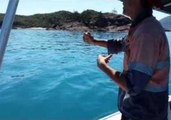 Huge Marlin Fish Pulled Onto Boat by Hand