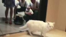 Un chat prêté pour les pendaisons de crémaillère