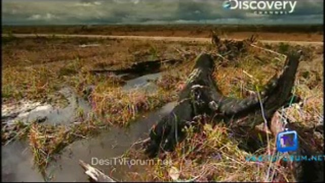 Nature's Microworlds 17th September 2014 Video Watch Online Pt2