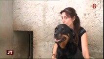 Adoptions d'animaux : Bilan mitigé au refuge de Marlioze
