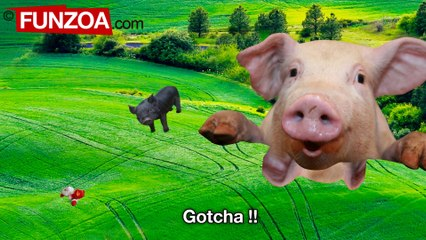 Why Do Pigs Fly - Funzoa Song