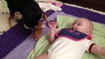 Des bébés qui jouent avec des chiens adorables : compilation hilarante!