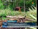 Campesinos guatemaltecos exigen derogación de Ley Monsanto