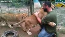 Des animaux sauvages qui fraternisent avec des hommes