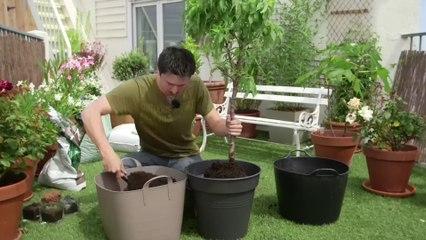 Déco Brico Jardinage : Planter un arbre fruitier nain