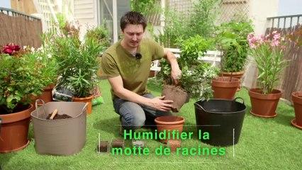 Déco Brico Jardinage : Planter un arbuste persistant