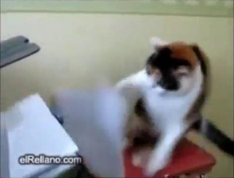 British Cat Destroys Printer