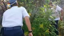 Trani - Coltivava marijuana, arrestato 30enne (22.09.14)