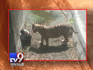 White tiger kills class 12th student at delhi zoo - Tv9 Gujarati