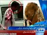 Gullu Butt, Tahir ul Qadri and Imran Khan for sale. 23 Sep City42 - mediatrack Pakistan