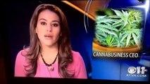 Une présentatrice télé avoue en direct tenir un club de Cannabis et quitte le plateau