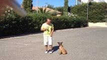 dressage canin la ciotat Joy petite malinoise de deux mois et demie 1ere leçon(www.toutoucool13.fr)
