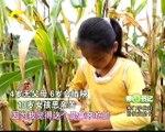 第一书记 广西露美村水果种植项目 20140926