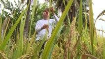 Colombia adapta cultivos a cambio climático