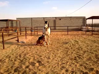Riding horses(arabian riding)first time after 6 months rest