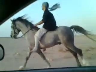 Riding horses(arabian riding)canter