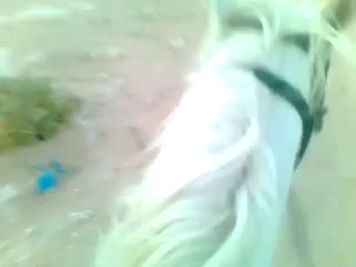 Riding horses(arabian riding)^___^
