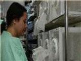 البرازيل توظف البعوض لمكافحة فيروس حمى الضنك