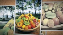 Hotel Palm Cove | Palm Cove Resort | Palm Cove Accommodations