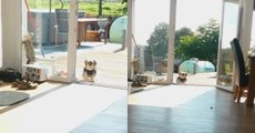 Dog Thinks Terrace Door Is Closed When It's Wide Opened