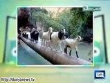 Dunya News Hasb e Haal 2nd October 2014 ( 2 Oct 2014 ) Hasb-E-Haal 2-09-2014(1)