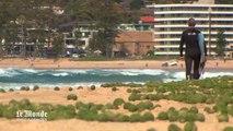 Des mystérieuses boules vertes sur une plage australienne