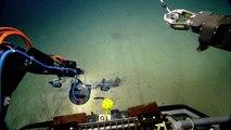 Étrange animal des fonds marins, du jamais vu !