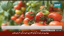 Tomato juice better for health than energy drinks