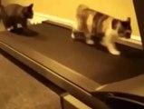 Cats on the treadmill very funny clip