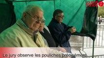 Fougères. Concours départemental de poulains et de pouliches d'un an