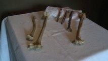 Une découverte exceptionnelle d'os datés de 200 000 ans en Normandie