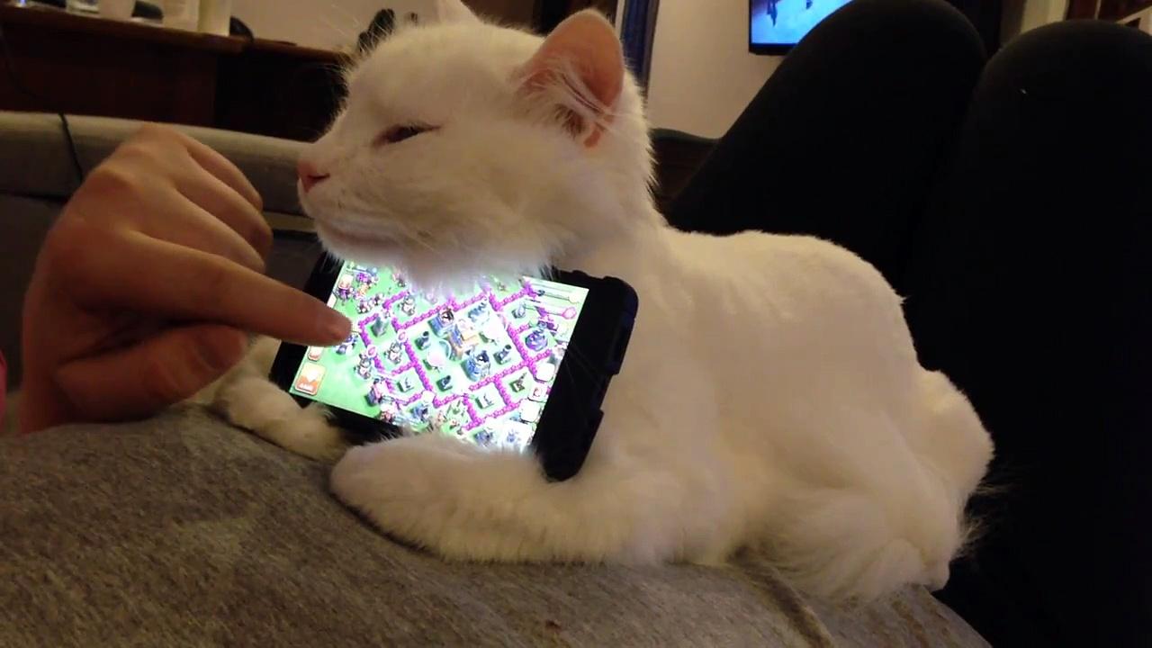 Support chat pour téléphone