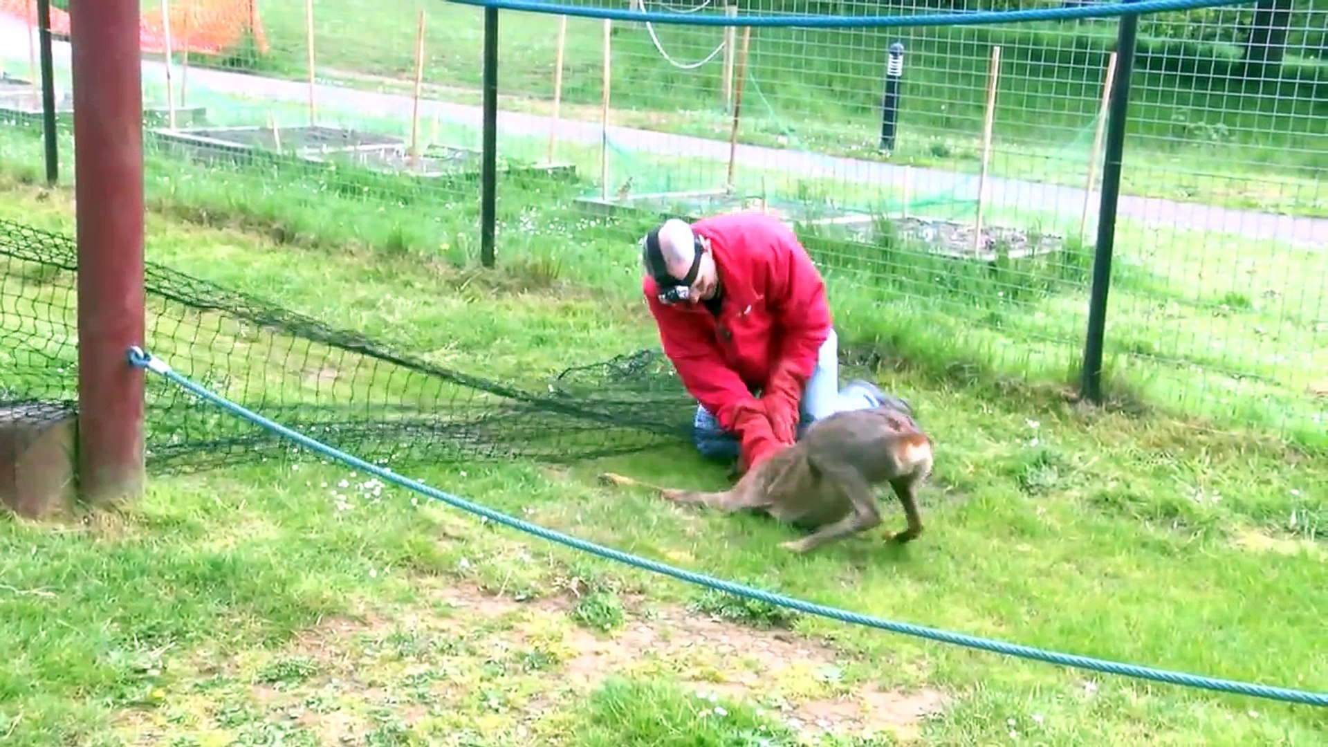Best animal and wildlife rescues - Wildlife Aid