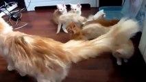 Yavrularını Korkutan Anne Kedi   çok komikler yahu  :)