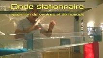 Réflexion des houles - Muséum d'histoire naturelle du Havre