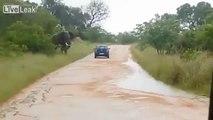 Un éléphant retourne une voiture lors d'un safari en Afrique du Sud